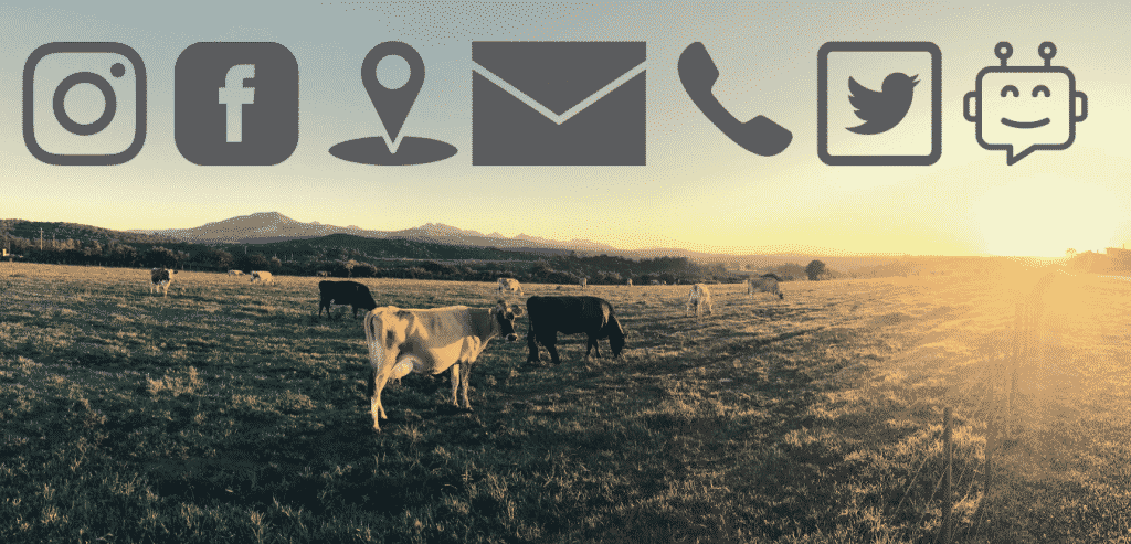 South West cattle grazing under our contact icons at sunset